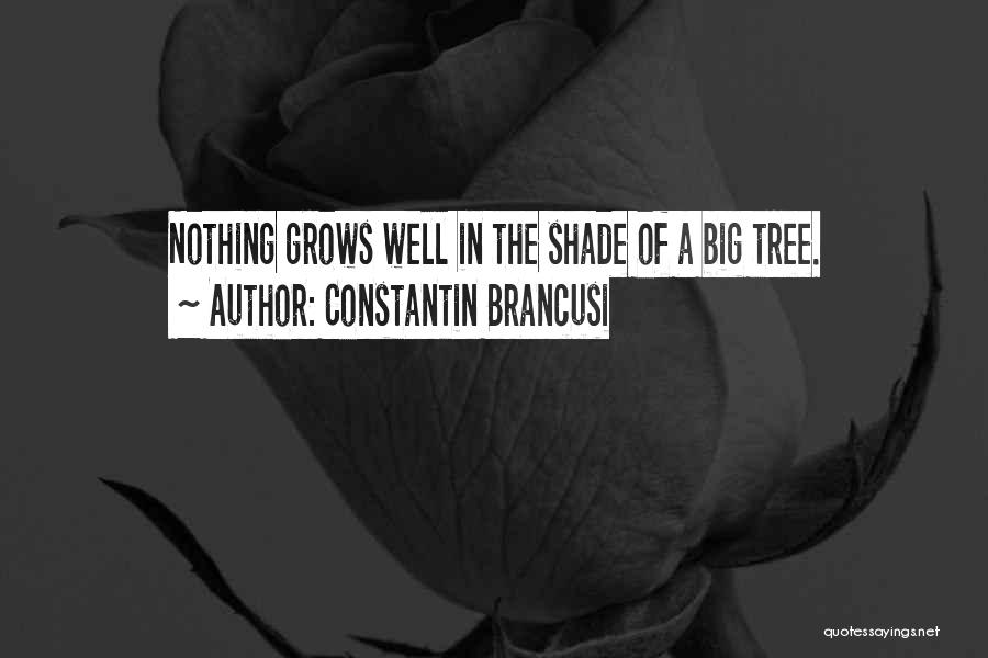 A Shade Tree Quotes By Constantin Brancusi