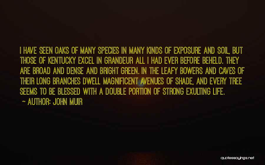 A Shade Tree Quotes By John Muir