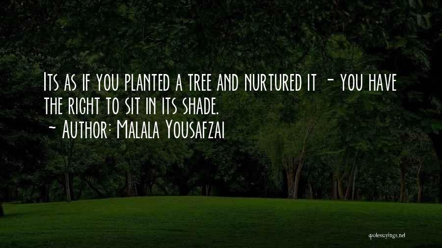 A Shade Tree Quotes By Malala Yousafzai
