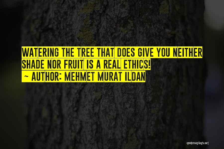 A Shade Tree Quotes By Mehmet Murat Ildan
