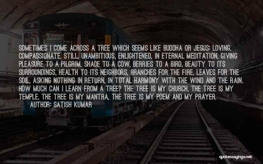 A Shade Tree Quotes By Satish Kumar