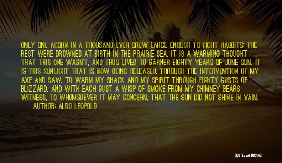 Acorn Quotes By Aldo Leopold