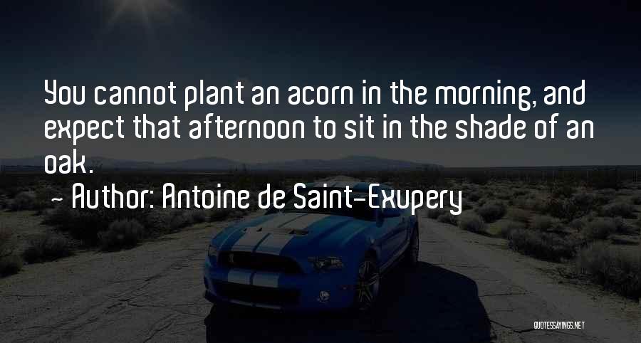 Acorn Quotes By Antoine De Saint-Exupery