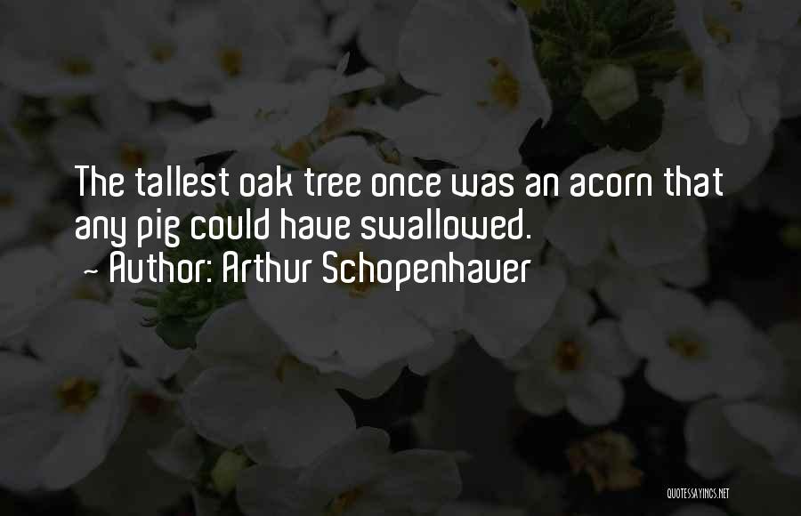 Acorn Quotes By Arthur Schopenhauer
