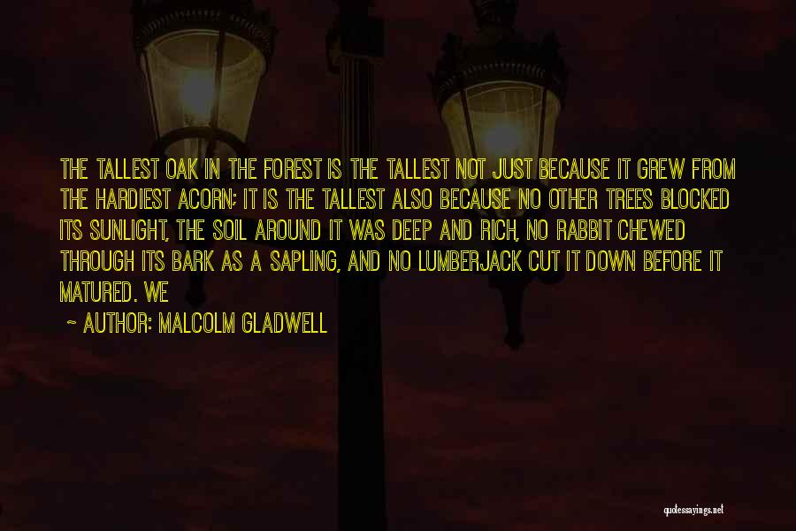 Acorn Quotes By Malcolm Gladwell