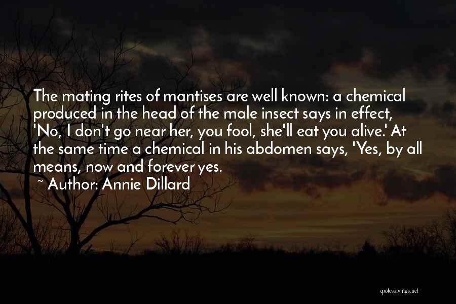 Alive And Well Quotes By Annie Dillard