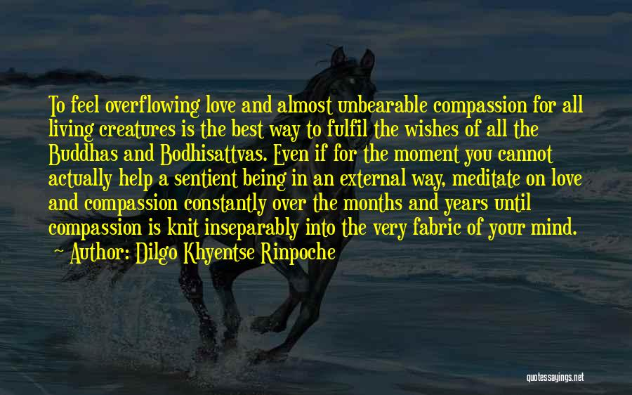 All The Best For Your Love Quotes By Dilgo Khyentse Rinpoche