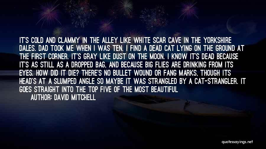 Alley Cat Quotes By David Mitchell