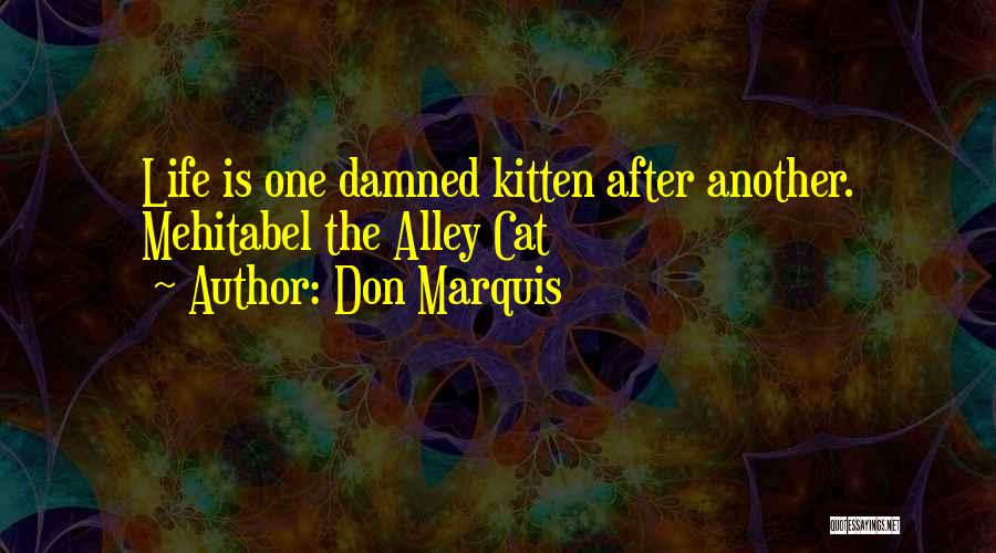 Alley Cat Quotes By Don Marquis