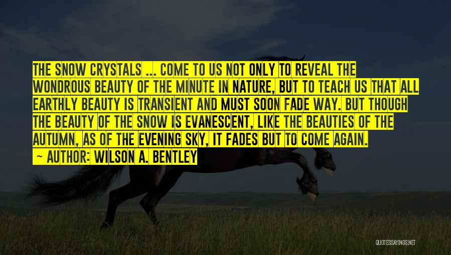 Beauty Fades But Quotes By Wilson A. Bentley