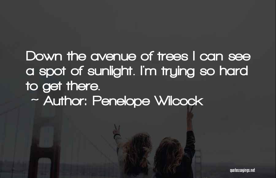 Best Sunlight Quotes By Penelope Wilcock