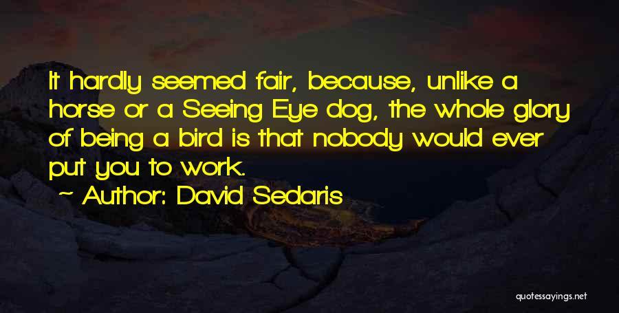 Bird Dog Quotes By David Sedaris