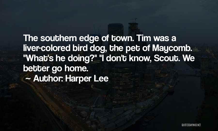 Bird Dog Quotes By Harper Lee