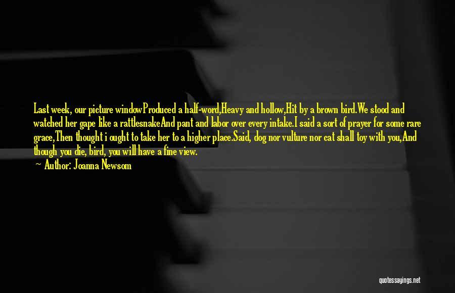 Bird Dog Quotes By Joanna Newsom