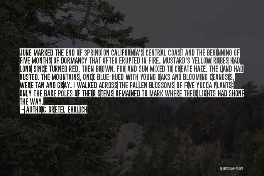 Blue Fire Quotes By Gretel Ehrlich