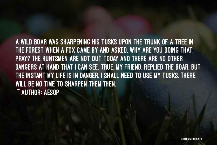 Boar Life Quotes By Aesop