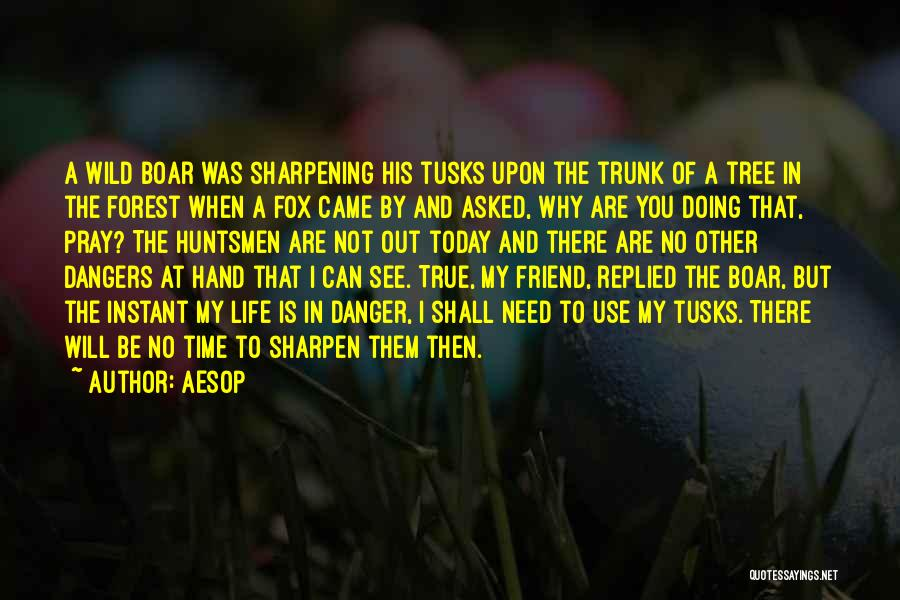 Boar Quotes By Aesop