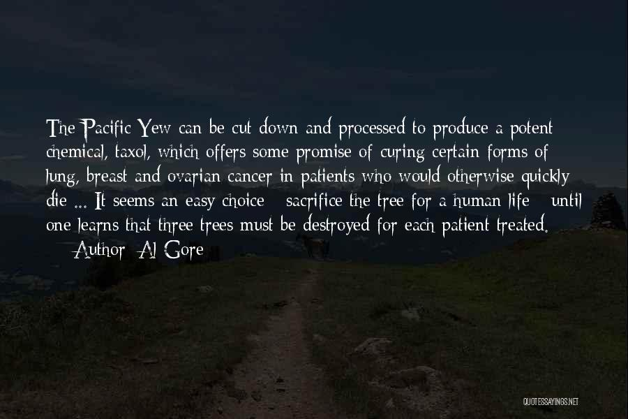 Breast Cancer Patients Quotes By Al Gore