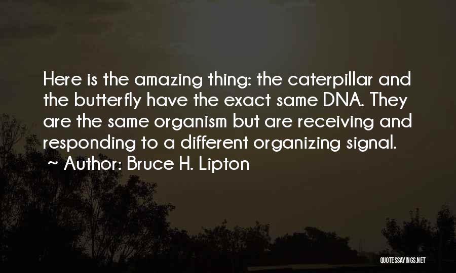 Butterfly And Caterpillar Quotes By Bruce H. Lipton