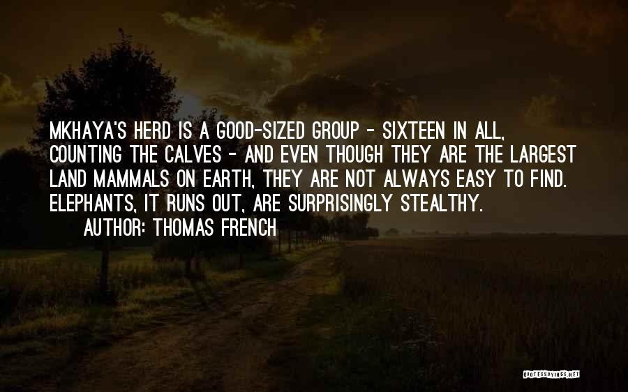 Calves Quotes By Thomas French