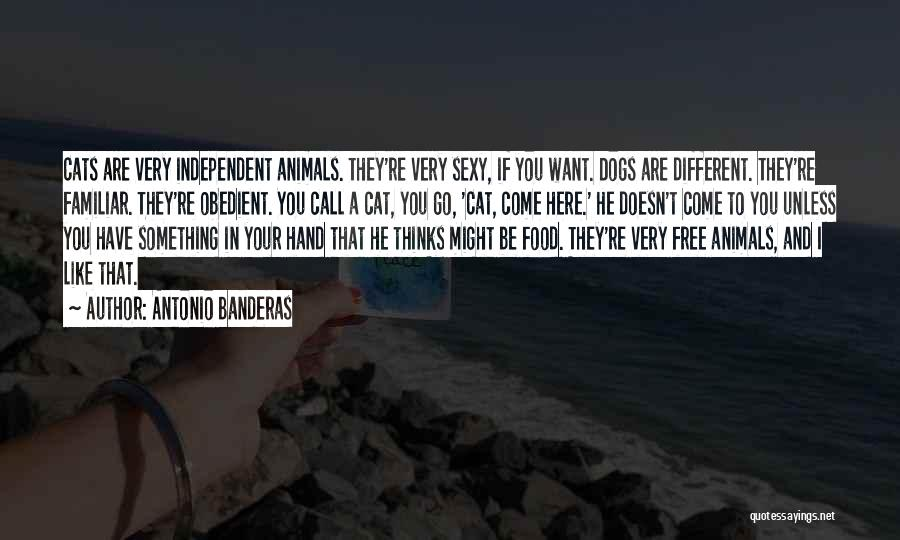 Cats And Dogs Quotes By Antonio Banderas