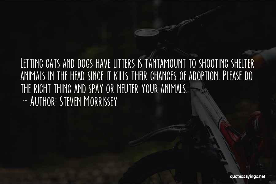 Cats And Dogs Quotes By Steven Morrissey