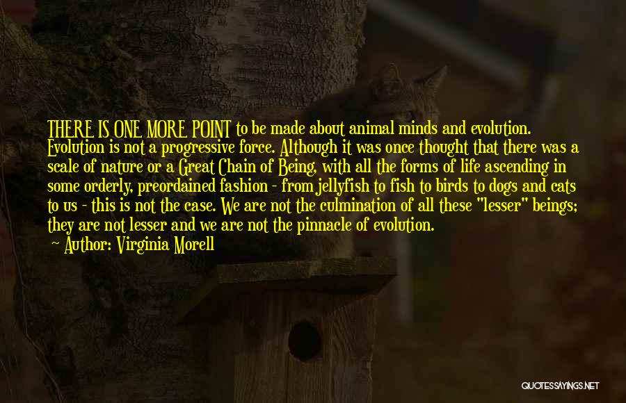 Cats And Life Quotes By Virginia Morell