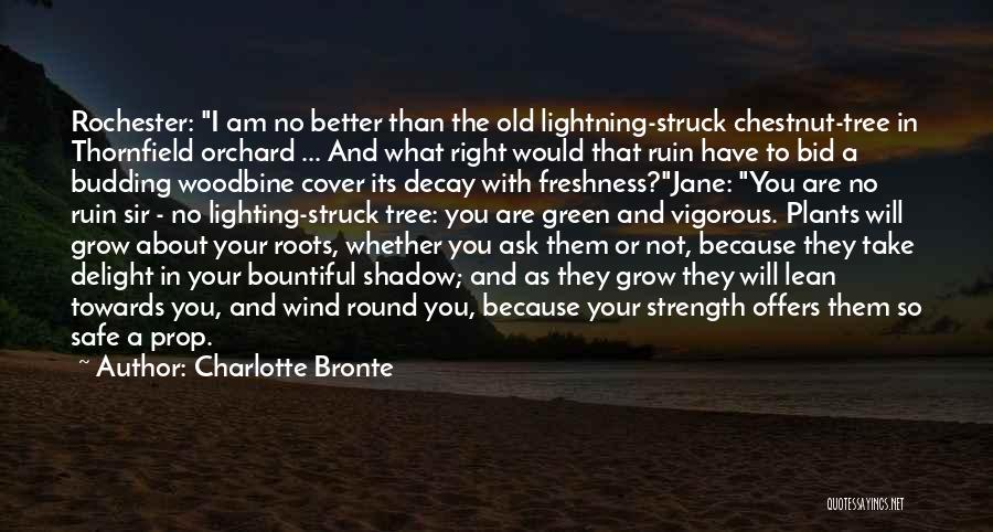 Chestnut Quotes By Charlotte Bronte