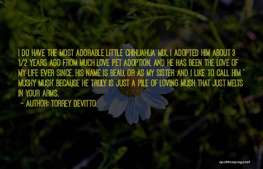 Chihuahua Love Quotes By Torrey DeVitto