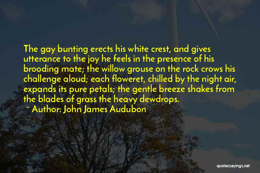 Chilled Night Quotes By John James Audubon