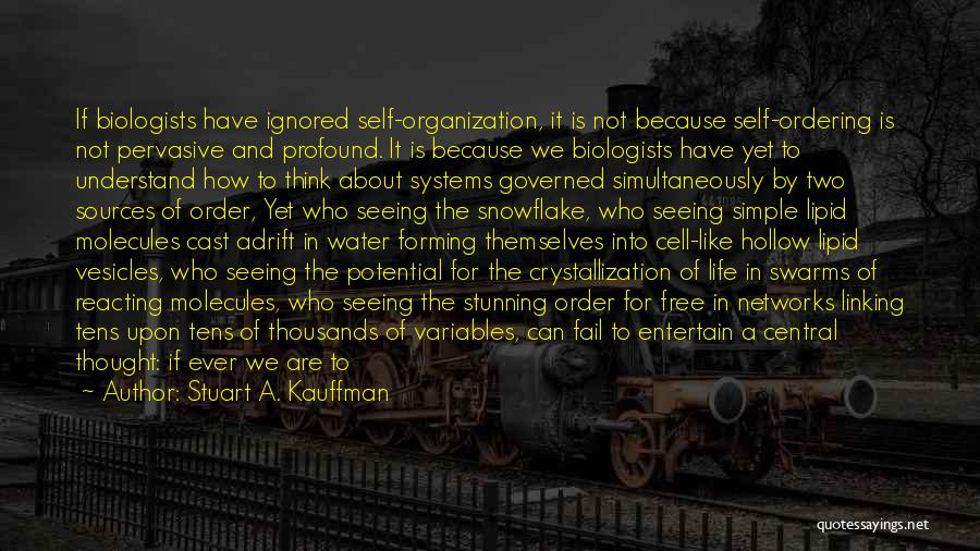 Creation Myth Quotes By Stuart A. Kauffman