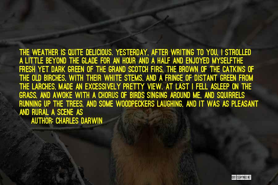 Dark One Quotes By Charles Darwin