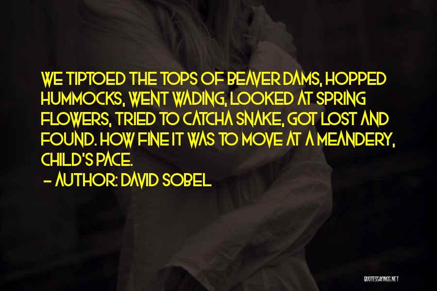 David Sobel Quotes 542704