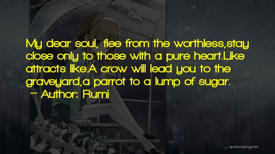 Dear Sugar Quotes By Rumi