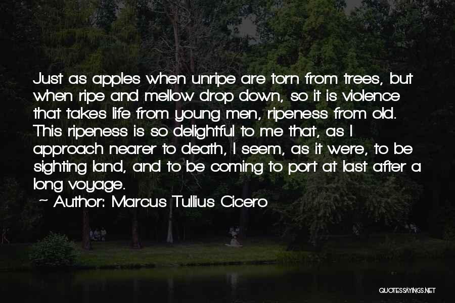 Death Coming Too Soon Quotes By Marcus Tullius Cicero