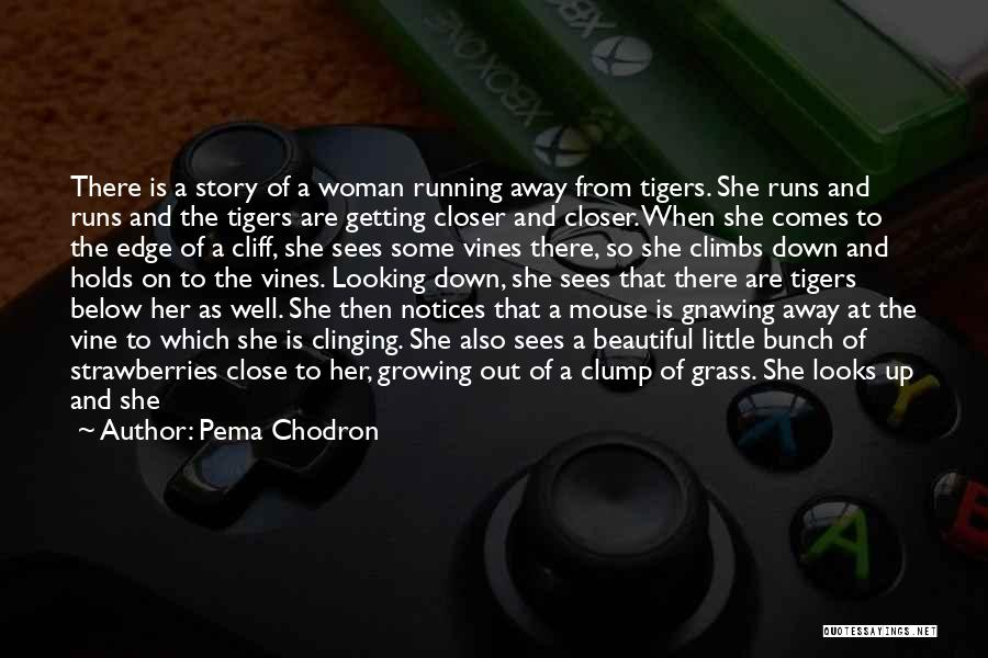 Depressed Life Quotes By Pema Chodron