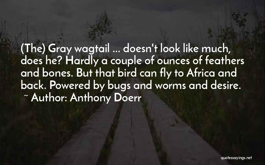 Desire To Fly Quotes By Anthony Doerr
