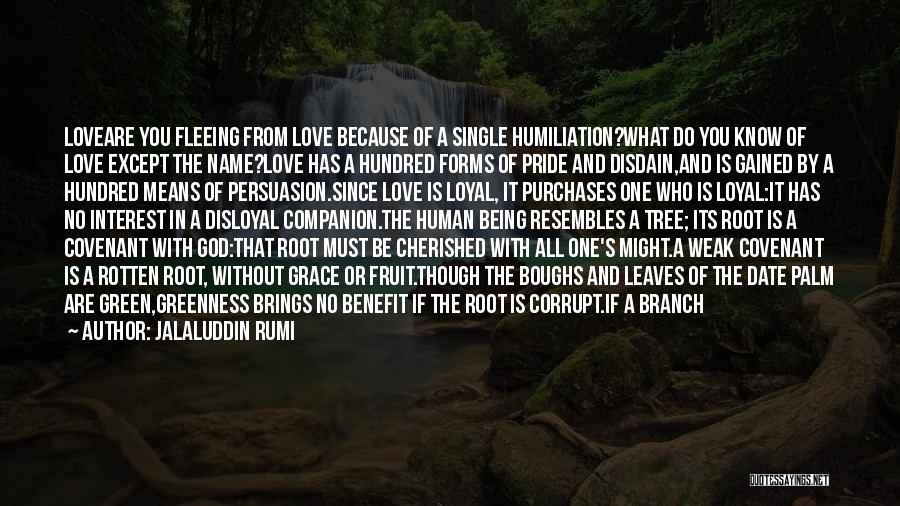 Disloyal Quotes By Jalaluddin Rumi