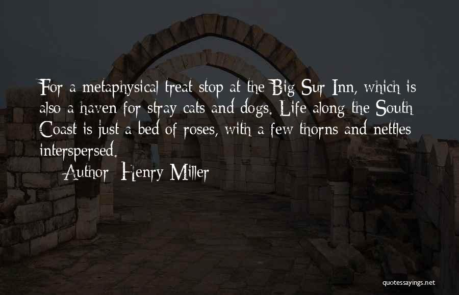 Dog Treat Quotes By Henry Miller