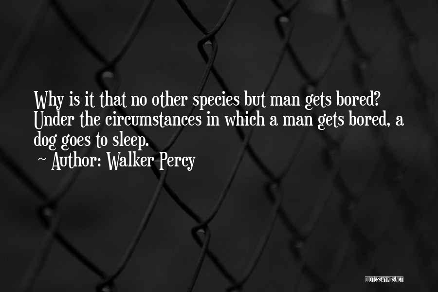 Dog Walker Quotes By Walker Percy