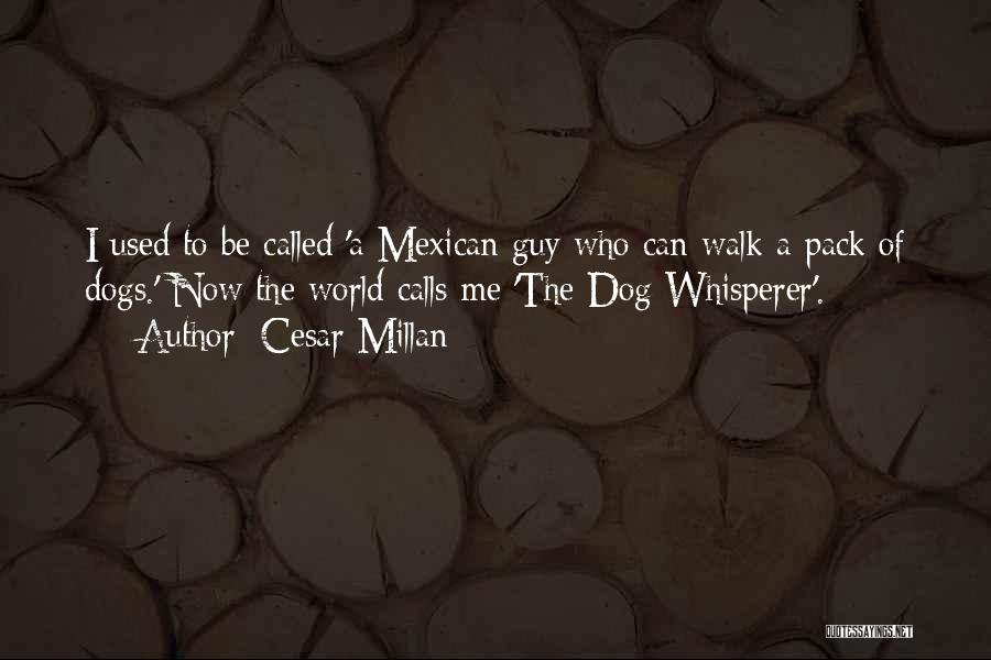 Dog Whisperer Quotes By Cesar Millan