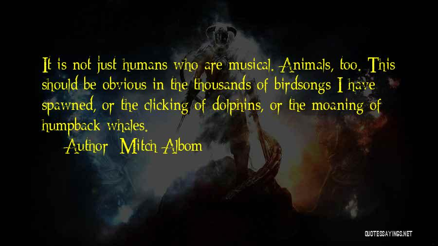 Dolphins And Whales Quotes By Mitch Albom