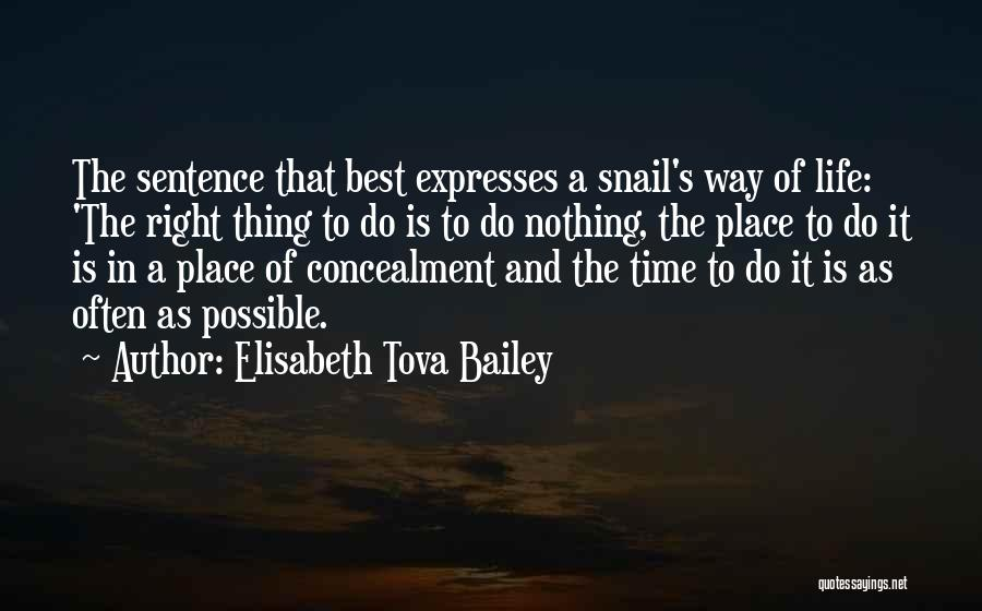 E.k. Bailey Quotes By Elisabeth Tova Bailey