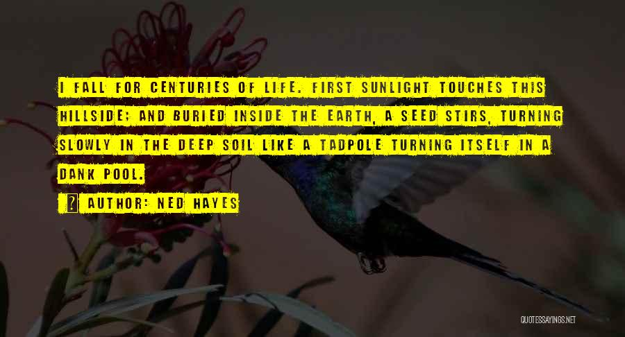 Earth Soil Quotes By Ned Hayes