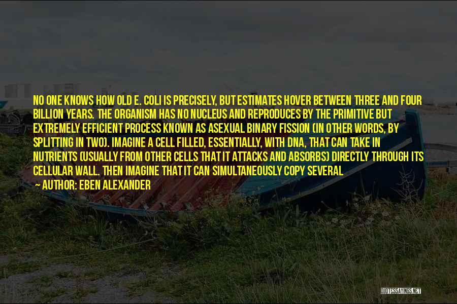 Eben Alexander Quotes 1631744