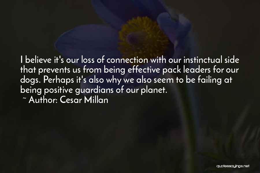Failing Love Quotes By Cesar Millan