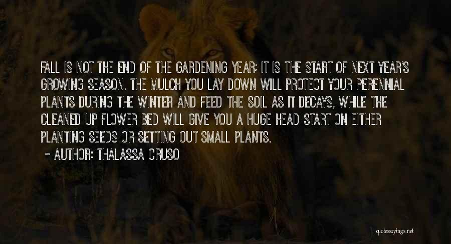 Fall And Winter Quotes By Thalassa Cruso