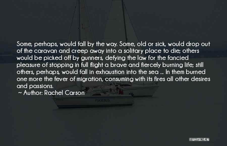 Fever Go Away Quotes By Rachel Carson