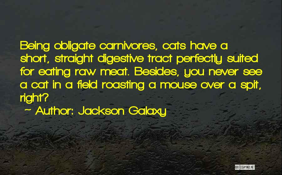 Field Mouse Quotes By Jackson Galaxy
