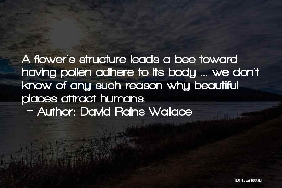 Flower Beautiful Quotes By David Rains Wallace